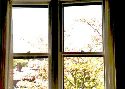 photo-of-window-and-dogwood-tree